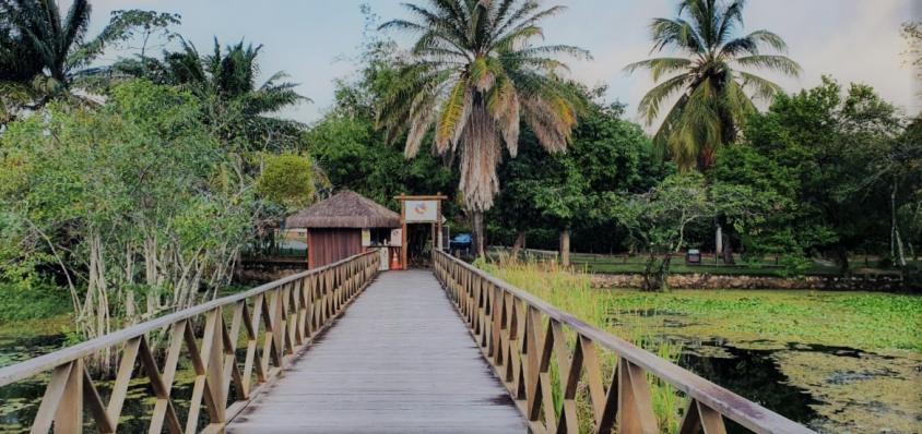 Férias em casa: Tivoli Ecoresort Praia do Forte oferece programação de lives educativas para as crianças