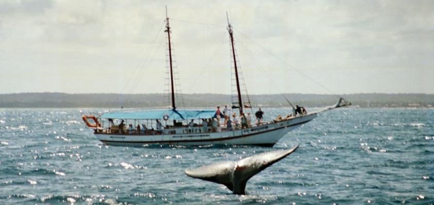 Observação das baleias jubartes: um programa para toda a família em Praia do Forte