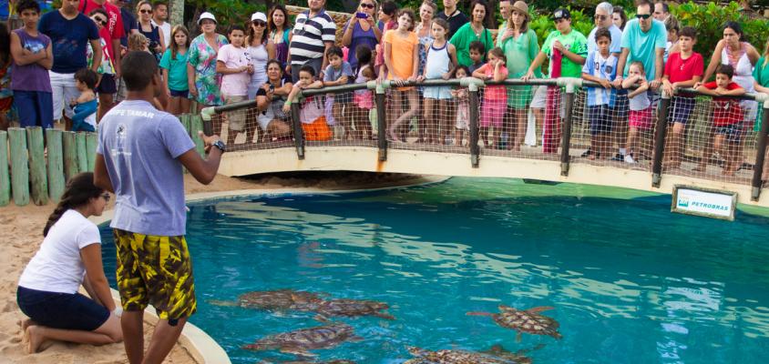 Tamar: uma história em defesa das tartarugas marinhas