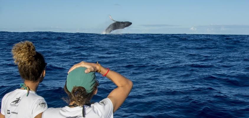 Temporada de observação das Baleias Jubartes em Praia do Forte