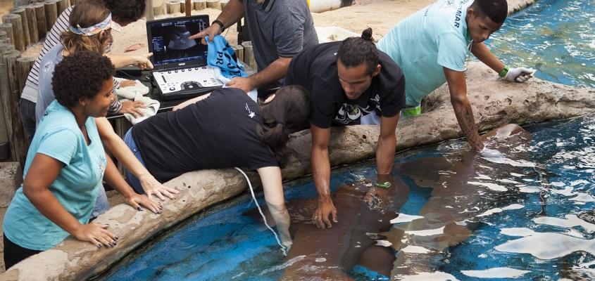 Tubarão-lixa se reproduz no Projeto TAMAR em Praia do Forte